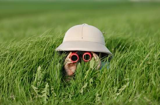 How Binoculars Work For Hunting