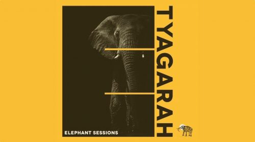 Watch: Elephant Sessions – Tyragarah (for World Elephant Day)