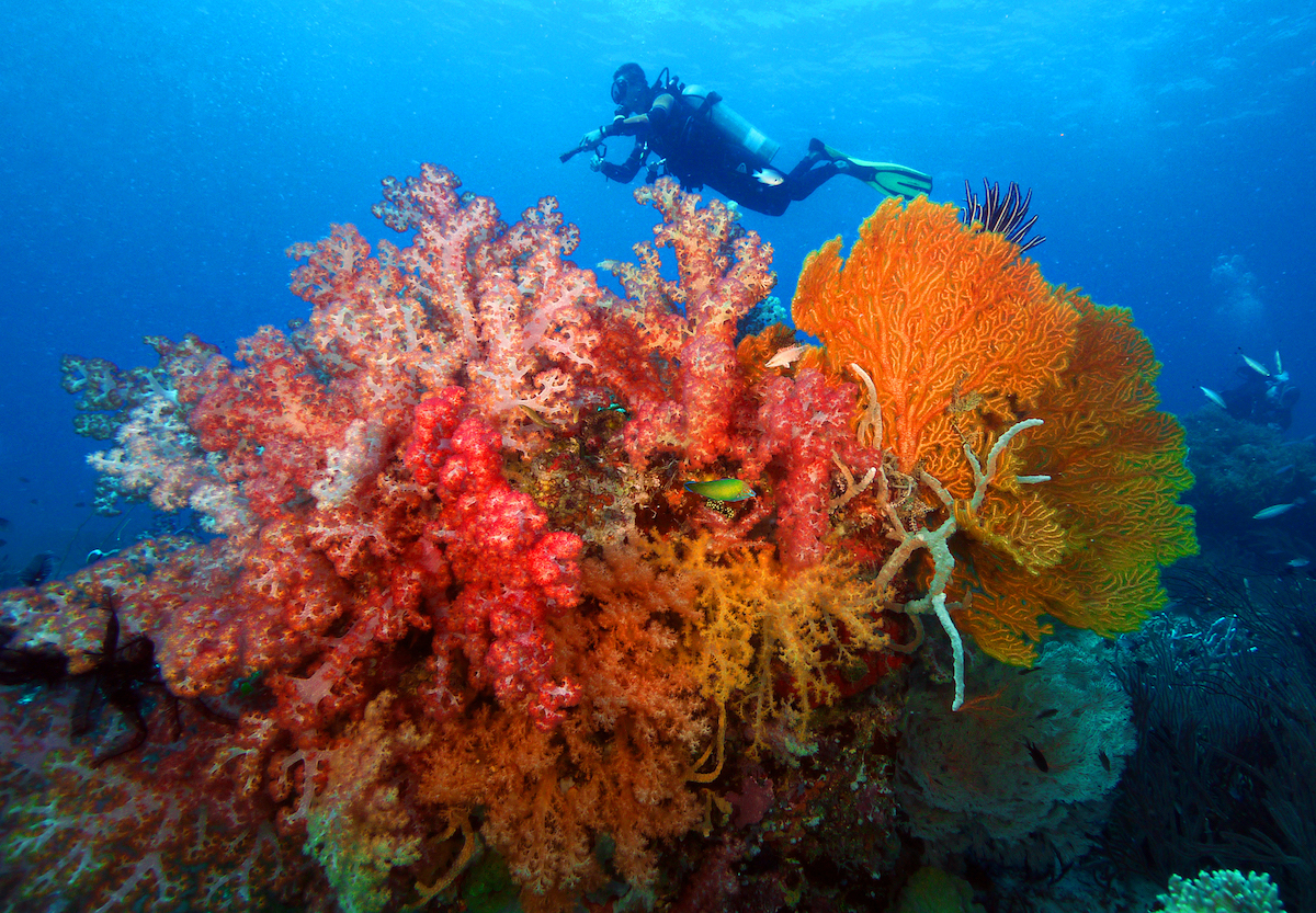 Dive into the Philippines' breathtaking and award winning waters