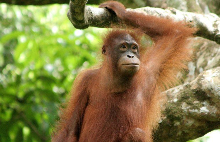 Bucket List: Top 15 Best Things To Do in Sandakan, Malaysia