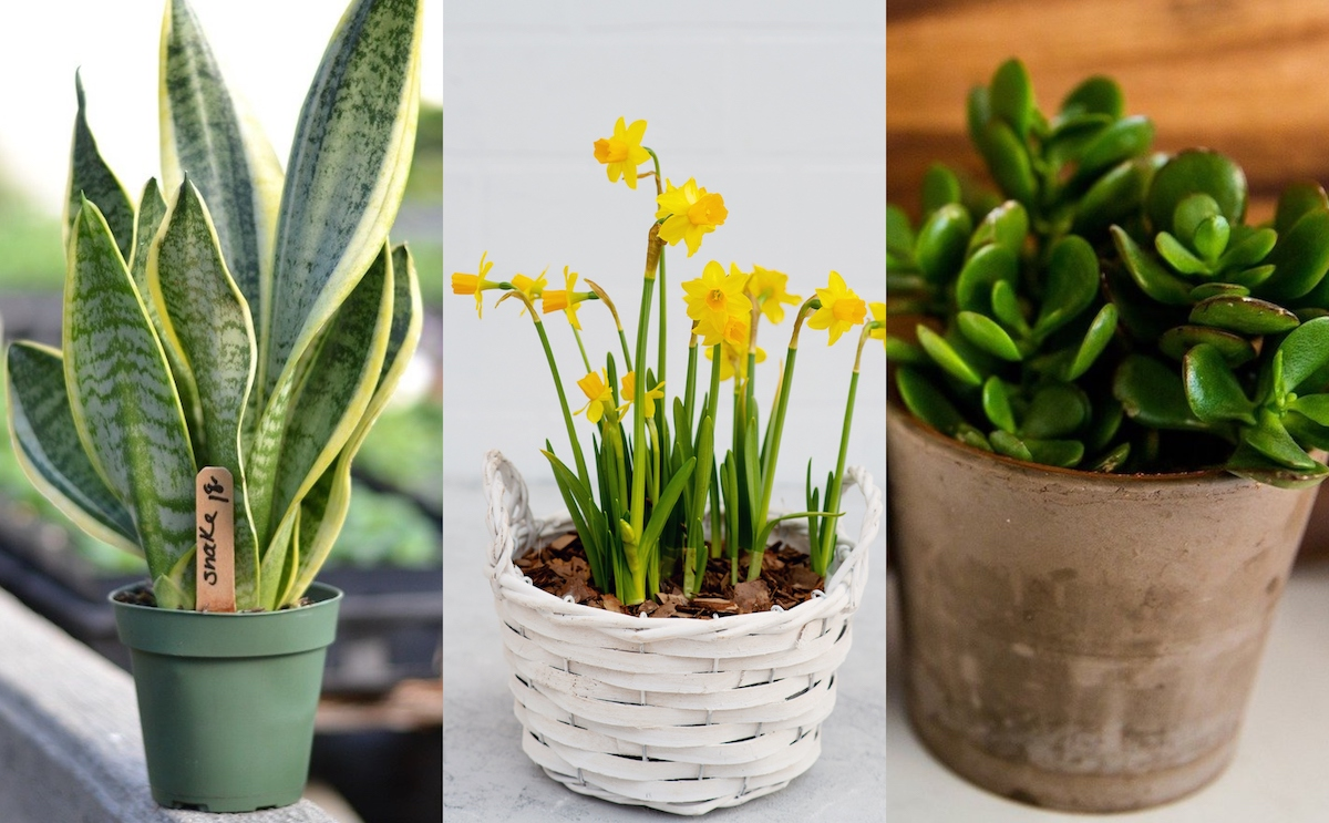 5 Indoor Plants that are Poisonous to your Cats