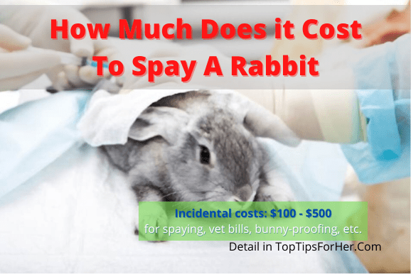 How Much Does It Cost To Spay A Rabbit