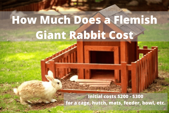 how much does a flemish giant rabbit cost
