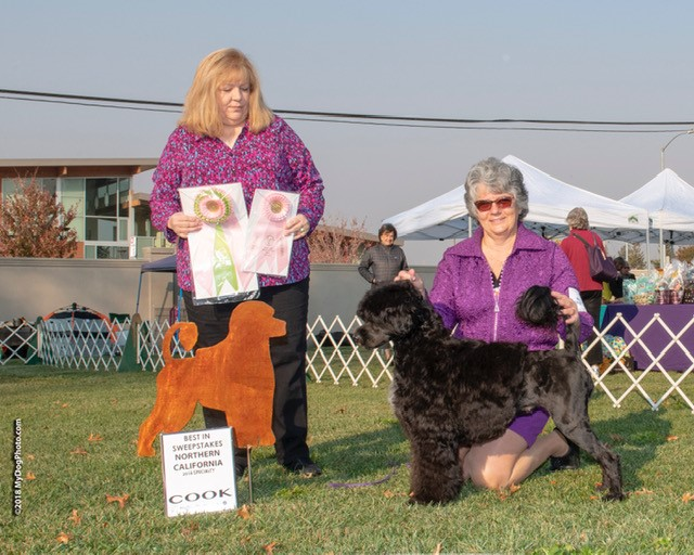 Best in Sweepstakes at the Portuguese Water Dog Club of Northern California Regional Specialty