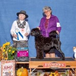 Dani Puppy working Group 1 and 5 point major