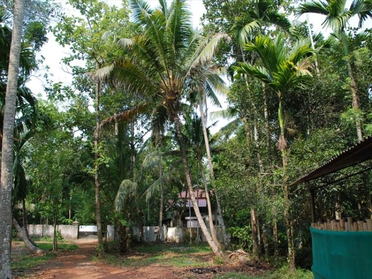 2013南インド旅行004