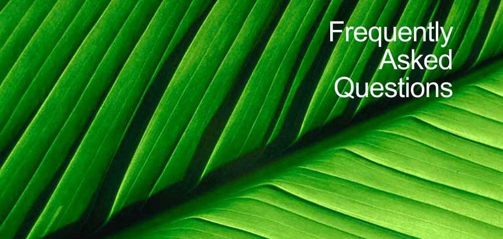 Frequently asked questions & acupuncture. Acupuncture treatments, Torquay, Paignton and Brixham.