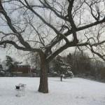 Winter view of Glendora Park