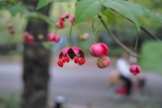 Chikako fall plants 1