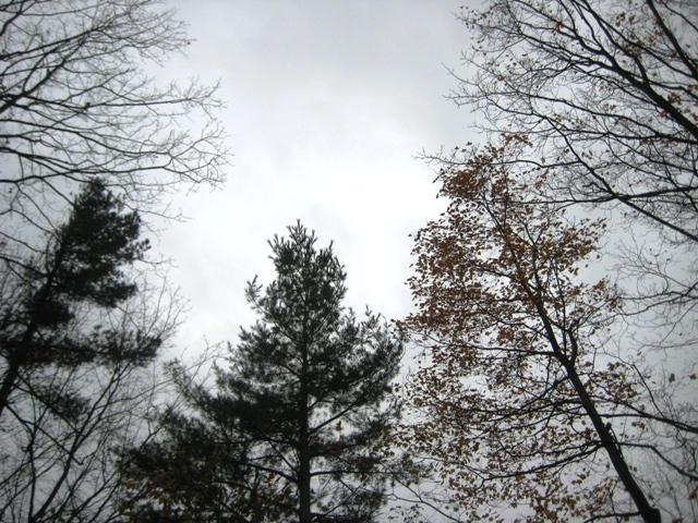 October 31 - 10:00 am - Silver and Pine
