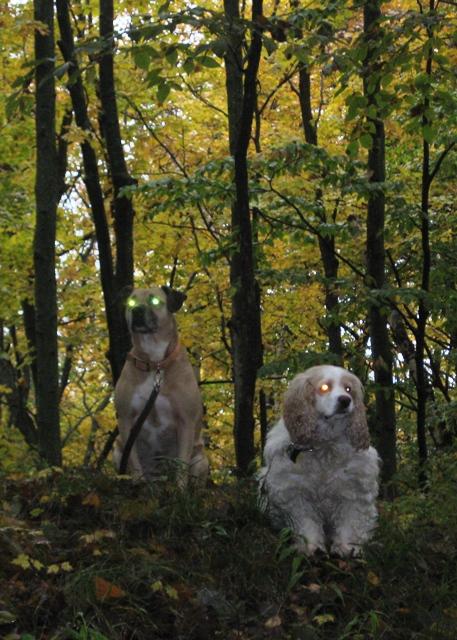 Robo-dogs on guard