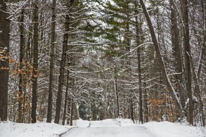 Winter - the road to the Writing Studio and Bait Shop