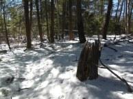 Swamp trail beckons