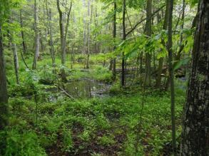 The Swamp in the Rain