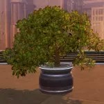 Potted Plant: Green Bush