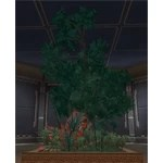 Yavin Tree Plot