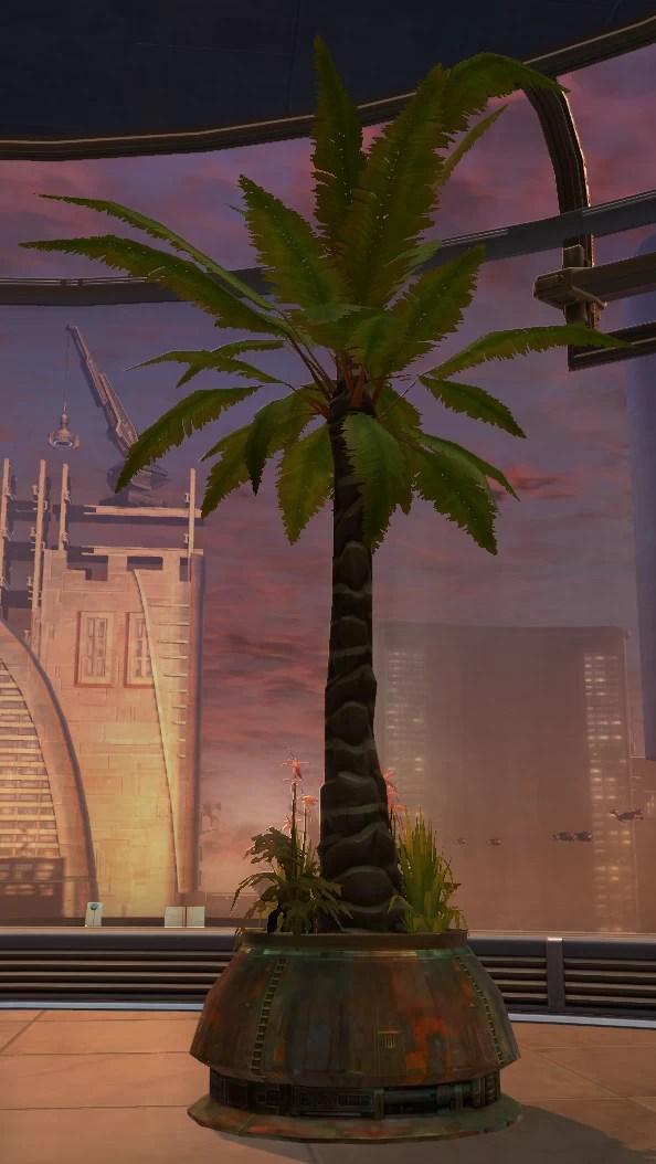 Tree Rishi Palm