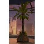 Tree: Rishi Palm