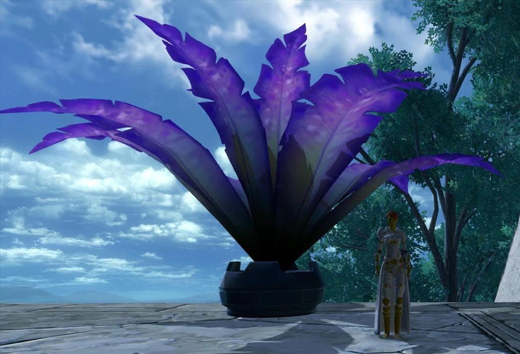 violet-fern