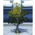 Dantooine Tree (Small)