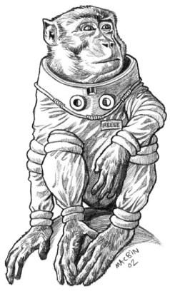ssz - monkey