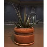Potted Plant: Yavin Octogave Plant