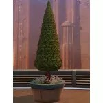 Topiary Tree (Cone)