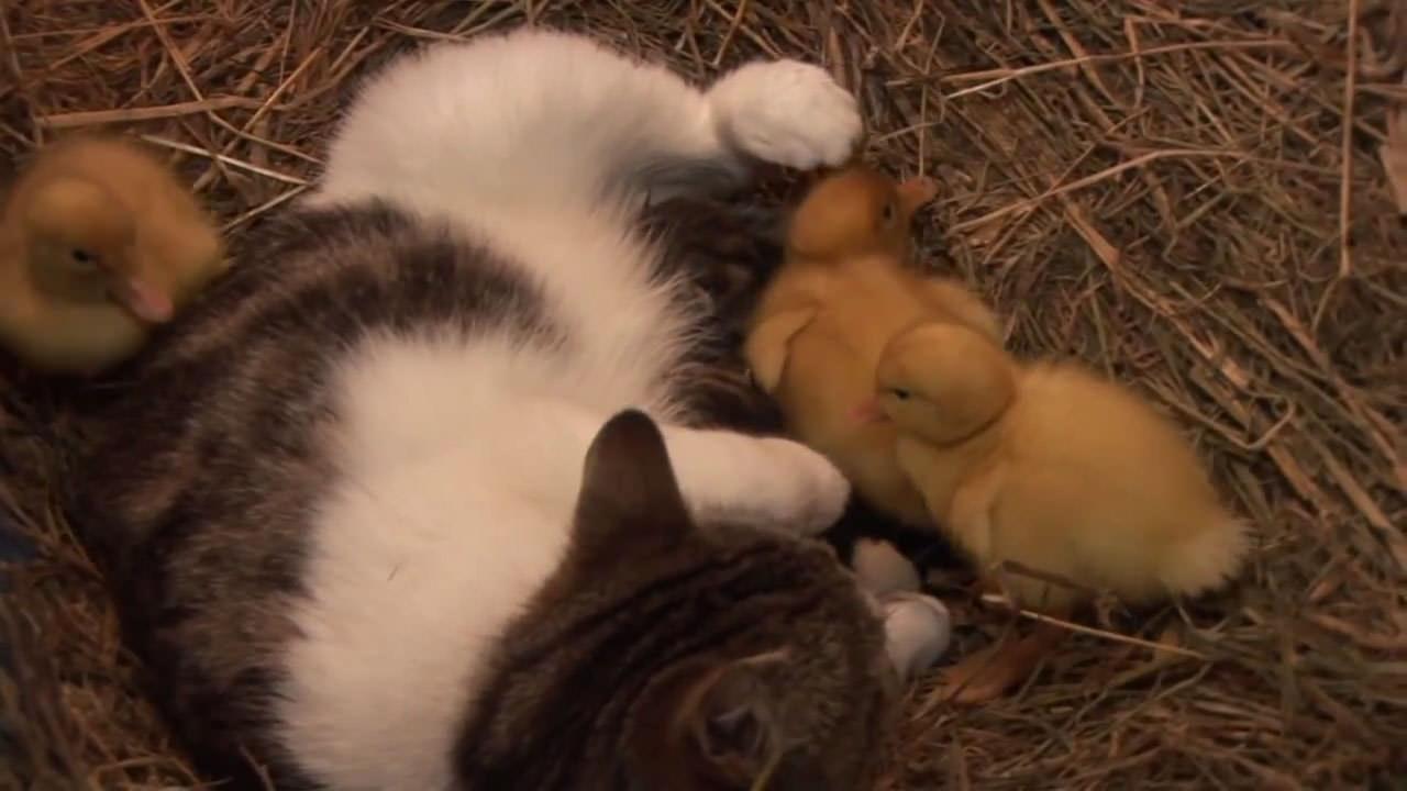 でも、この子たちには猫のお母さんがいます!