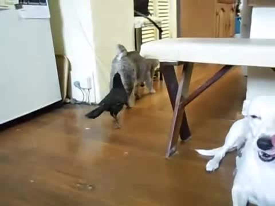 ネコさんもういいの?