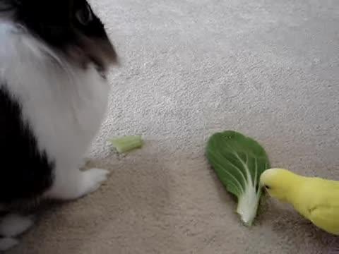 お野菜おいしい〜(๑´ڡ`๑)