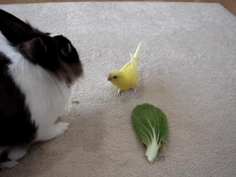 ウサギさん!お野菜おいしいね〜