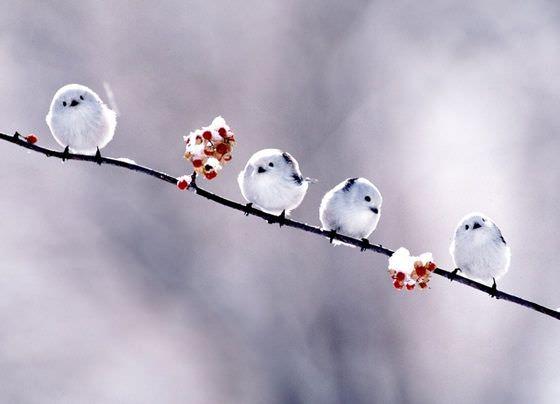 まんまるな鳥の写真14枚!013