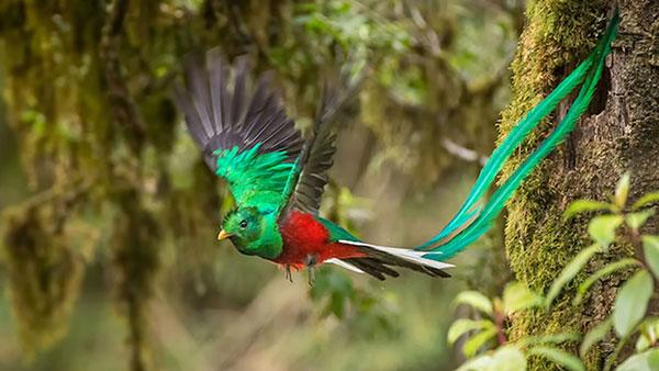 07-quetzal