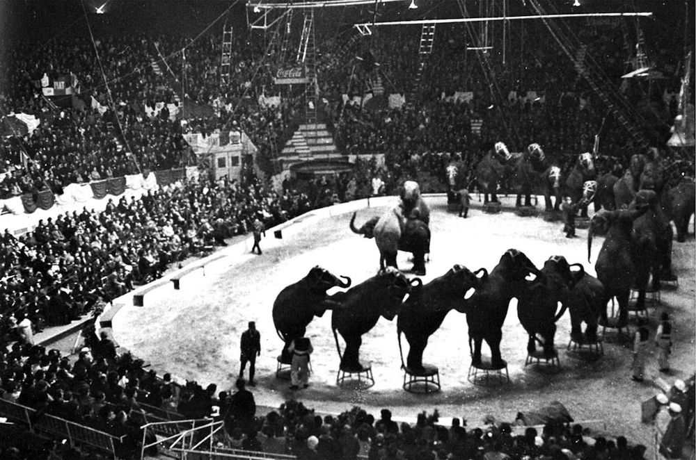 1963. Il Circo_Americano al Palasport Ruffini nel 1963