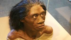 ciri ciri manusia purba Homo Floresiensis