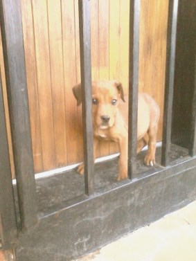 Nelly pup felt safe behind my burglar bars and barked at absolutely everything from that spot.