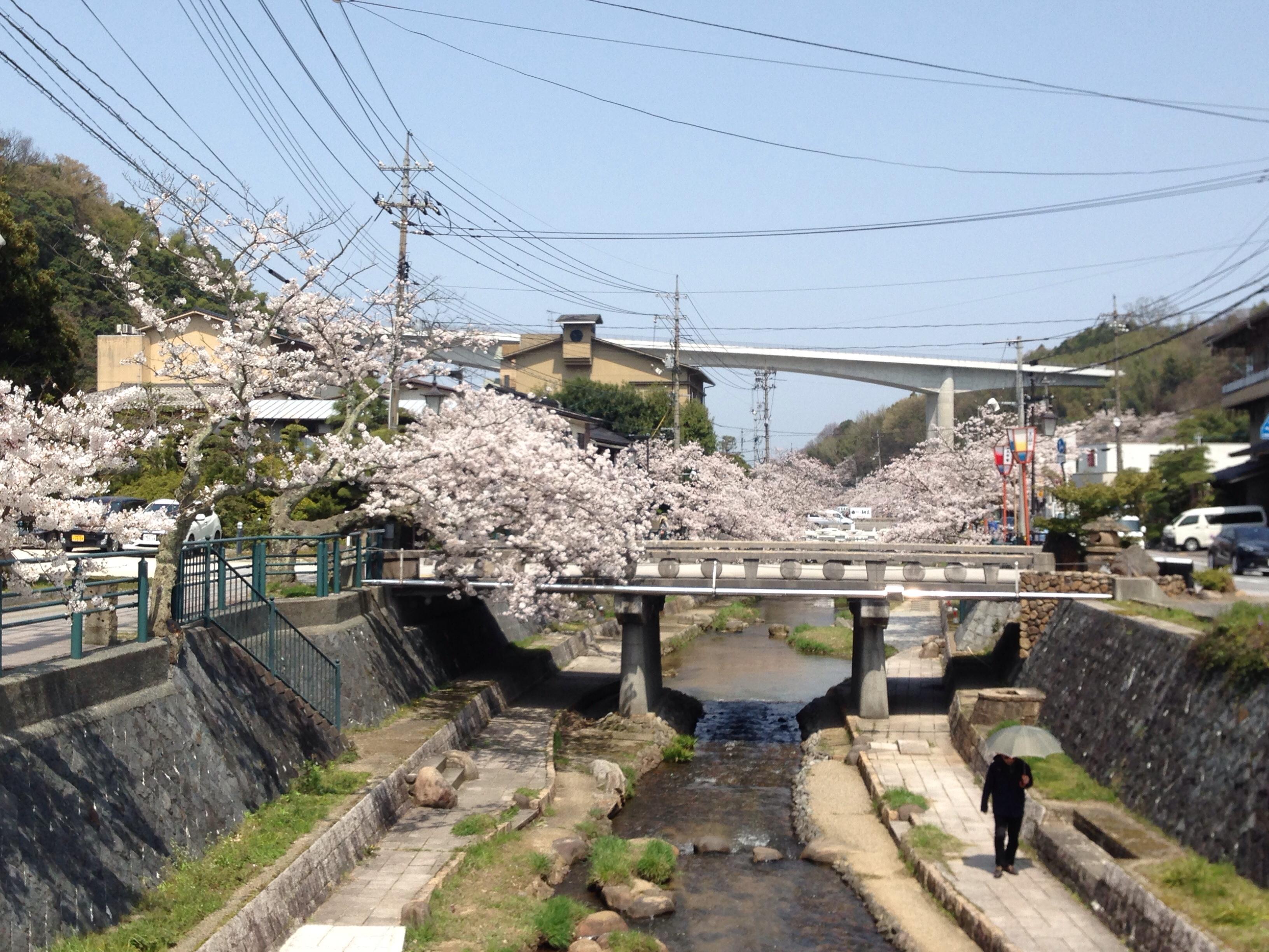 【2021年】玉造温泉(島根県)お花見・桜開花・イベント情報をまとめました
