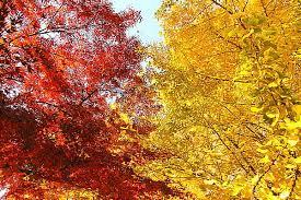 2019年10月24日は霜降|霜が降り、木々が紅葉する時期