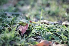 2019年11月8日は立冬|いつの間にか秋も終わり冬がやってきた!