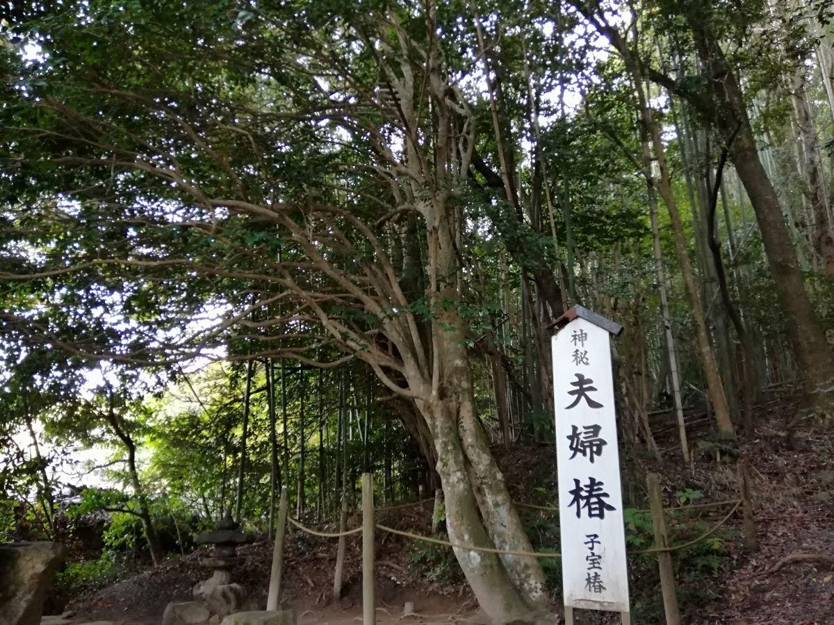 夫婦椿 八重垣神社
