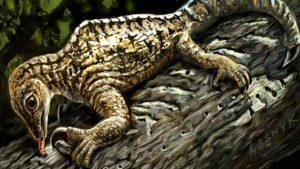strange-reptile-fossil