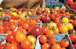 オーガニックの新鮮野菜が人気