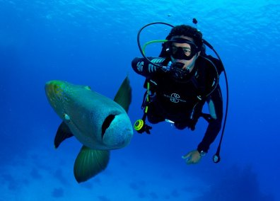 Diver with Napoleon