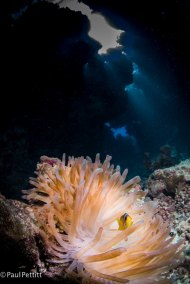 Anemone and Nemo in the Cave