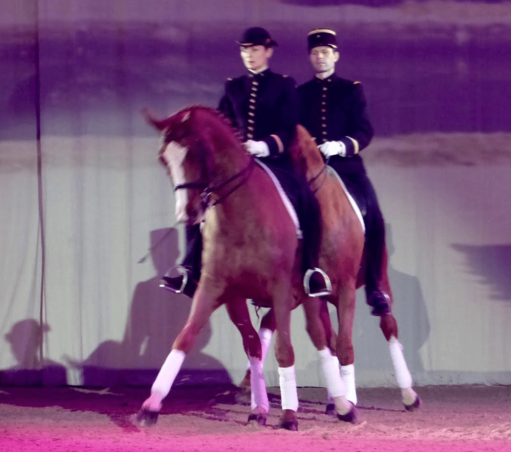Avignon cheval passion 2017 for Salon du chiot avignon 2017