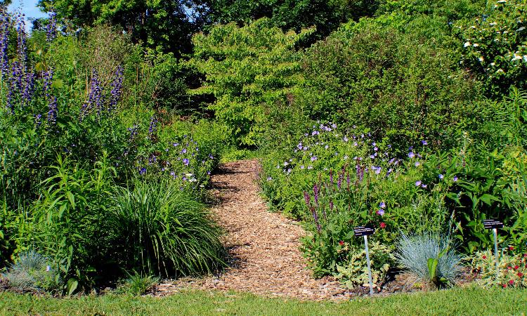 natures garden path-small