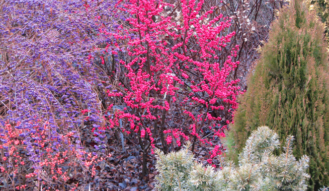 bright-berries