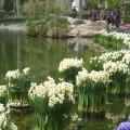 Ribbons-of-daffodilsWEB