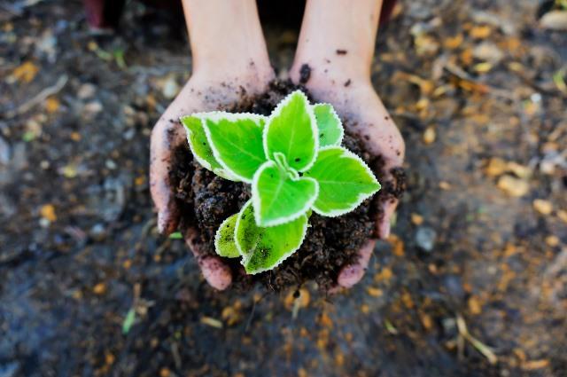seedling-1558599_1920_web
