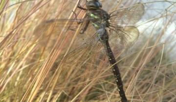 Dragonfly Entry Garden